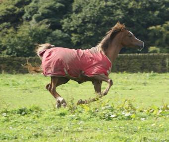 Chesney Horse...not Chesney Hawkes