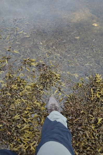 Seaweed......