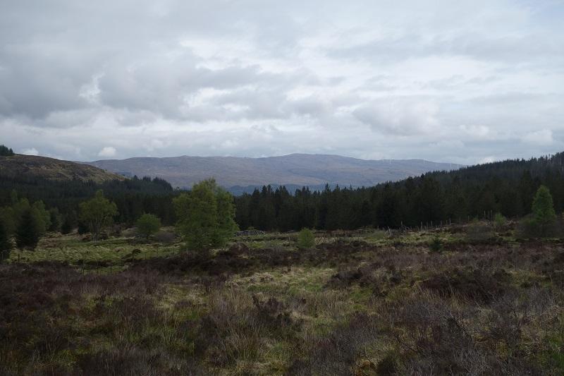 Leaving Glengarry Forest along Allt Lochan Fhudair