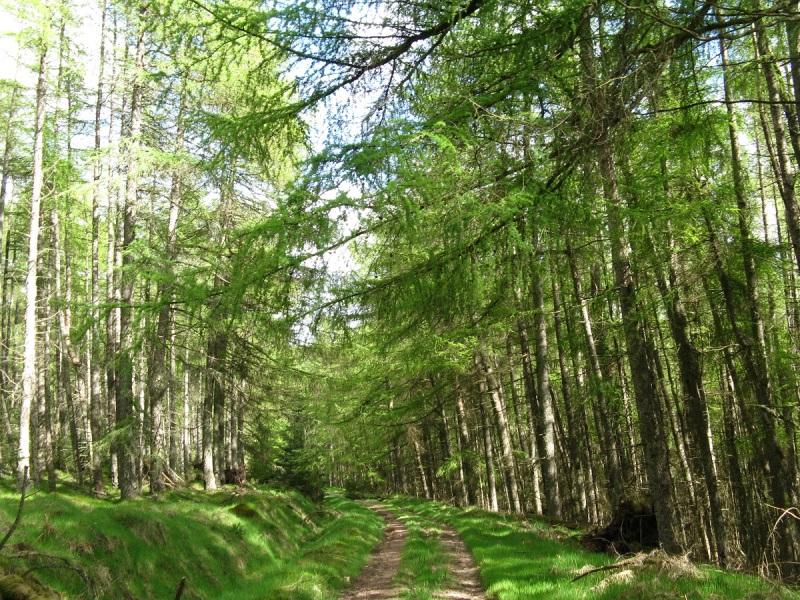 Walking through Fetteresso Forest